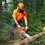Arbeitsunfälle bei Arbeiten mit der Motorsäge im Wald