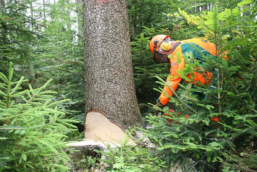 Holzernte-manuel-Forst-Wald