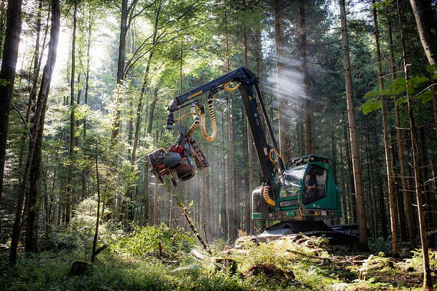 Maschinelle-Holzernte-FBG-Friedberg