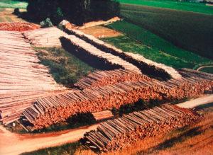 Holz-nass-lagern-FBG-Friedberg-Rinnethal