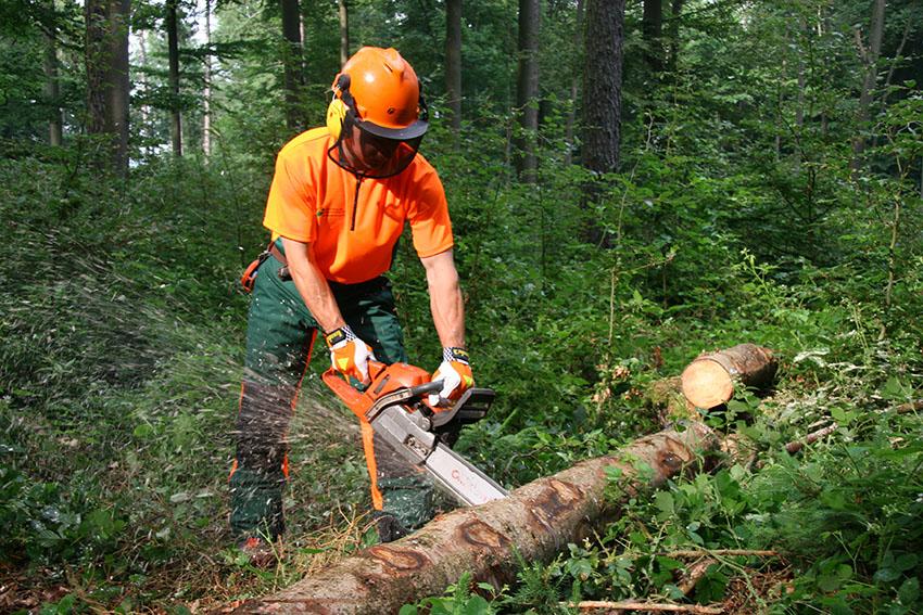 Waldarbeit-FBG-friedberg